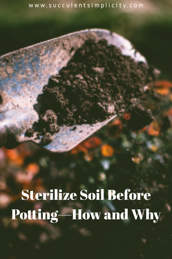 How and why to sterilize your soil before potting