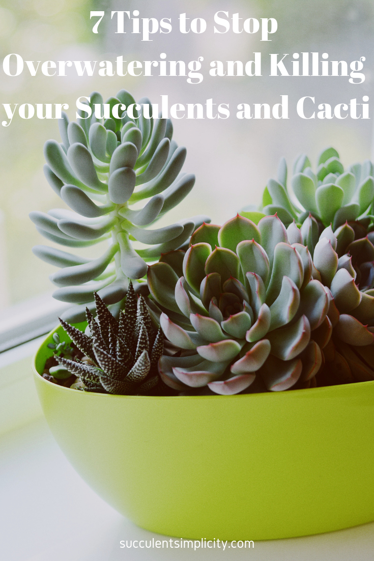 7 Tips to Stop Overwatering and Killing your Succulents and